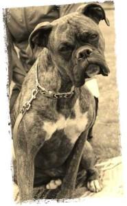 Axel-centre-canin
