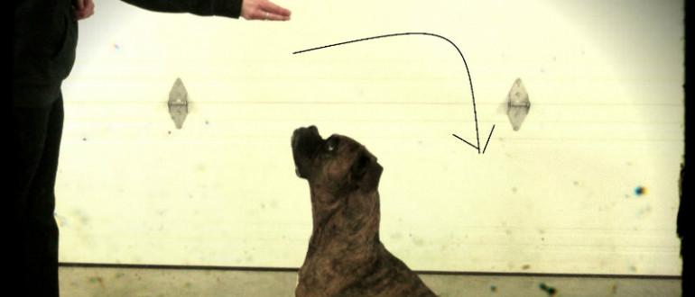 apprentissage - Intervention Comportement Animal
