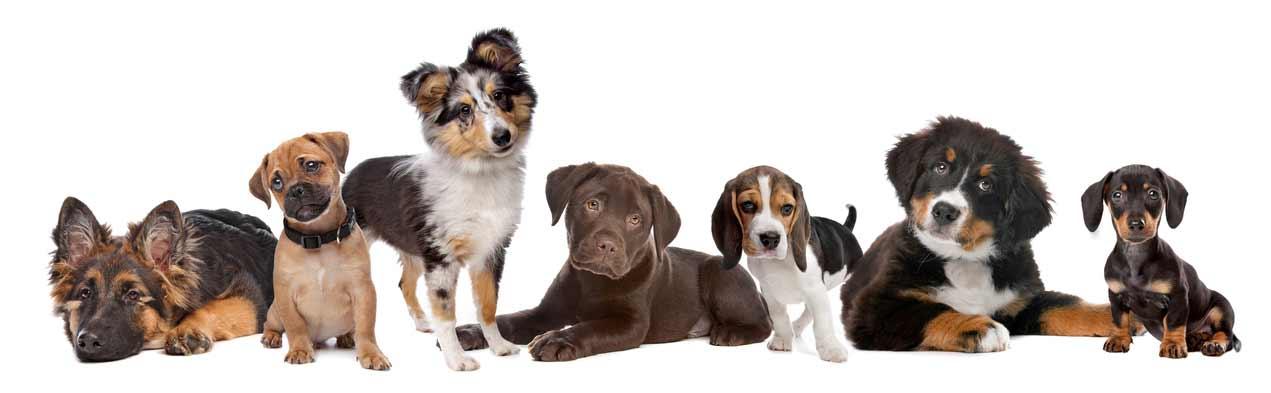 bébé chien Les chiens