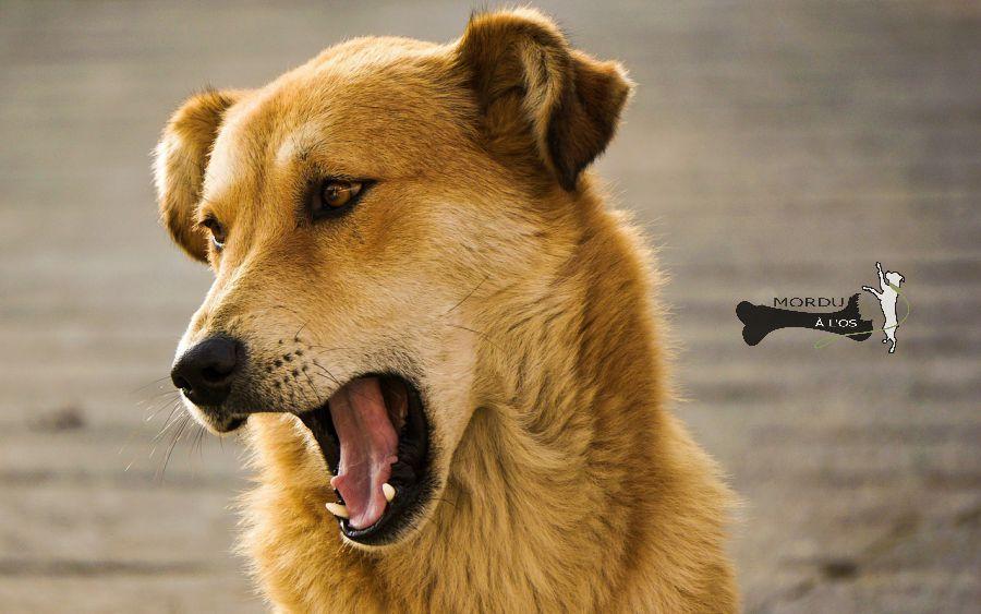 si mon chien parlait