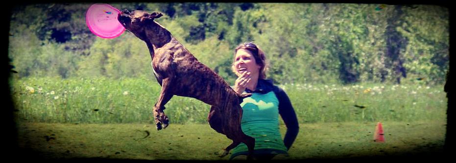 L'Activité est très importante dand la vie d'un chien. Trouvez en une qui le passionne!