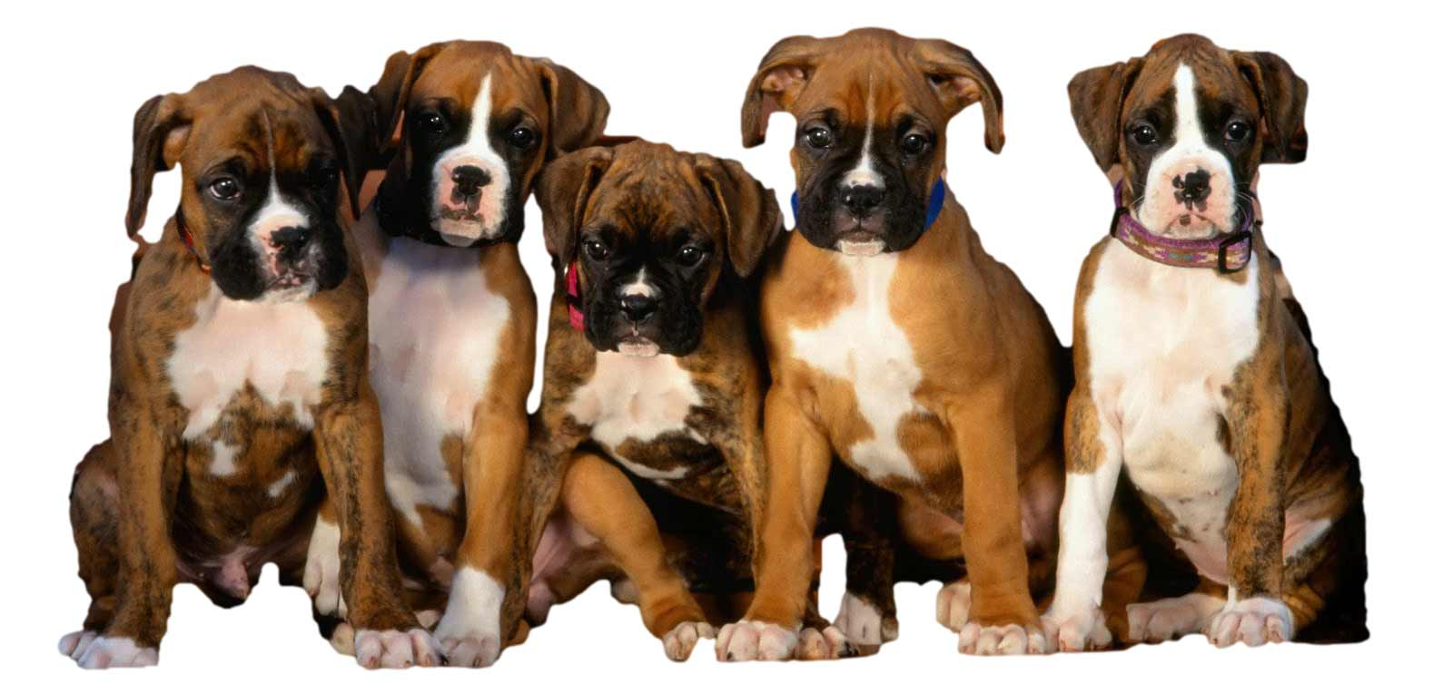 Les chiens et leur éducation privé ou en groupe