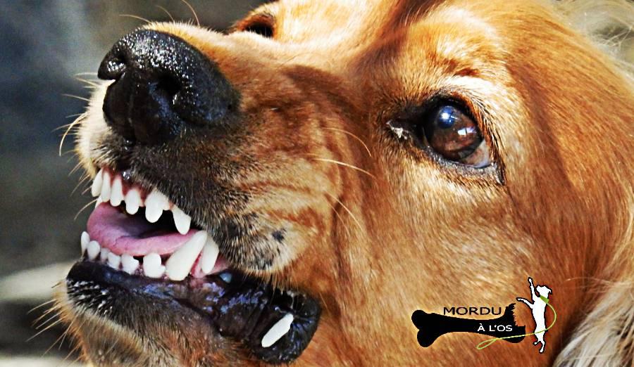 chiens dangereux